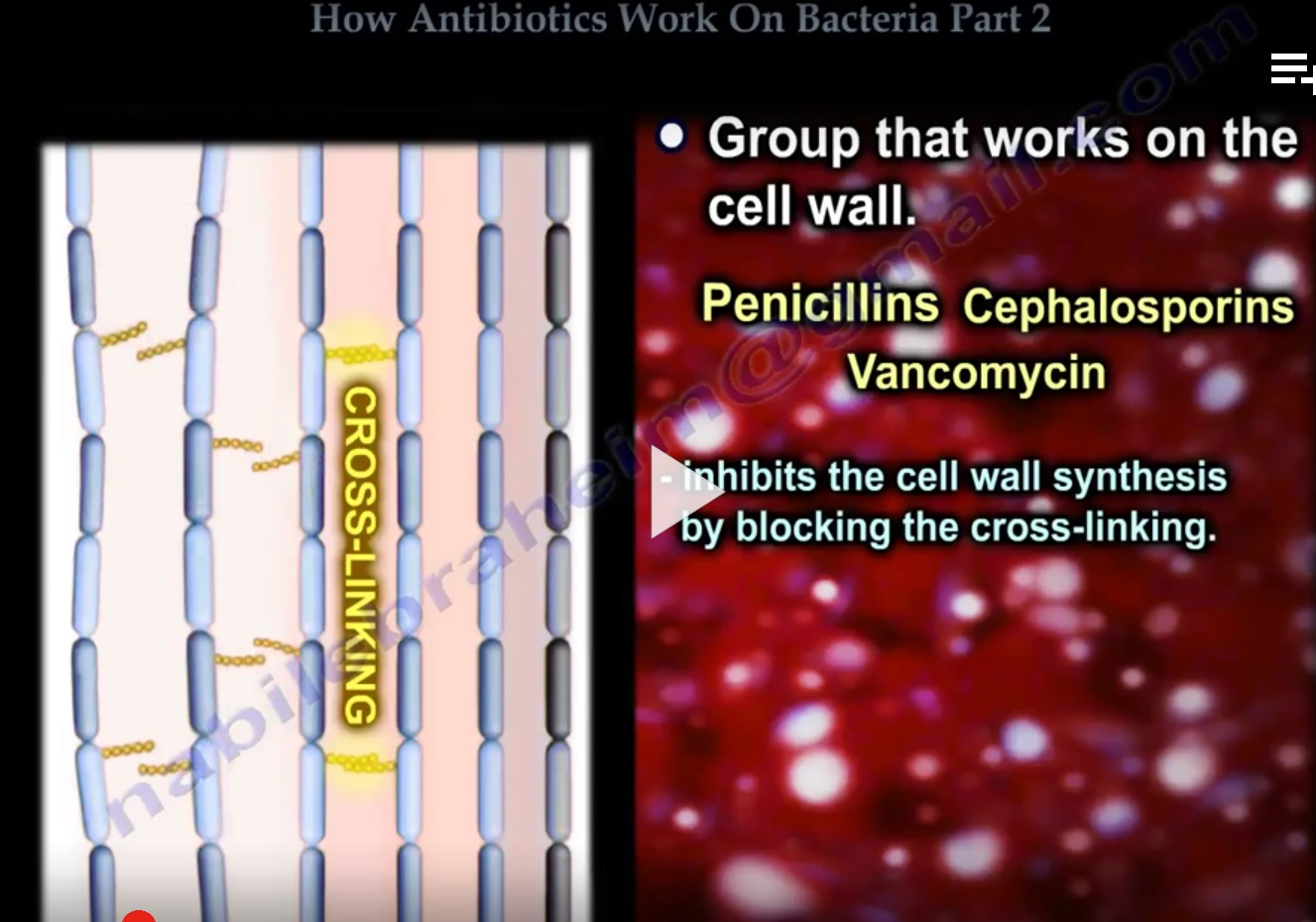antibiotcics part2