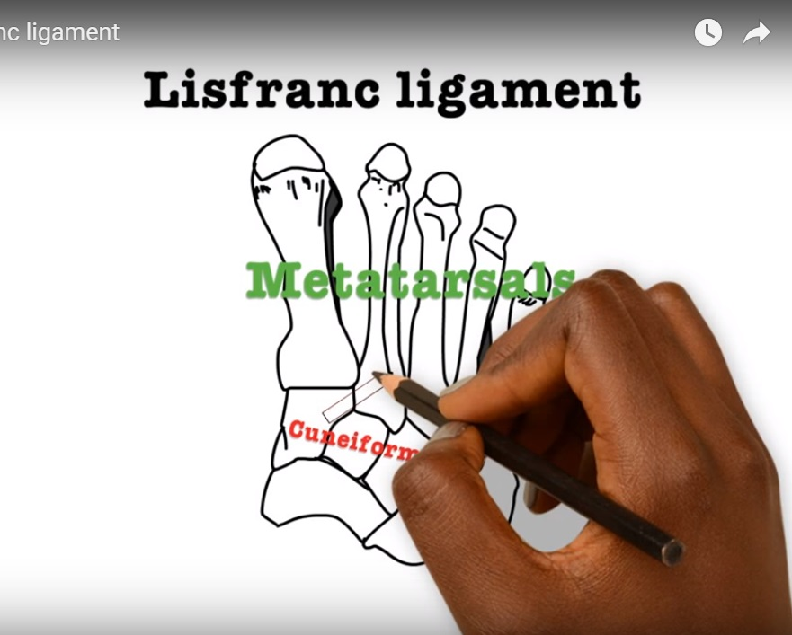 The Anatomy of LisFranc Ligament — OrthopaedicPrinciples.com