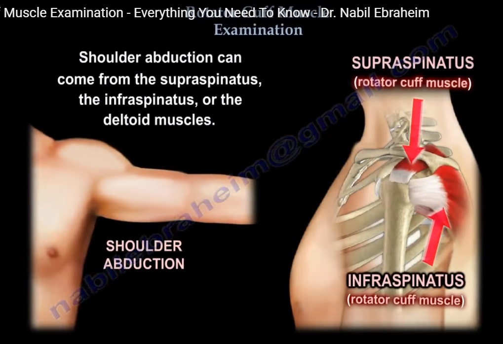 Examination of Rotator cuff muscles