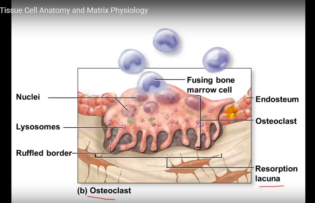 Matrix Definition In Anatomyphysiology - kalentri 2018
